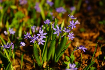 blue-star-322392_1280.jpg